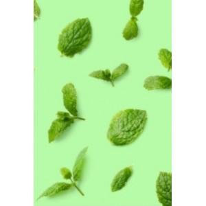 Мята в парфюмерии: лучшие духи с запахом мяты
