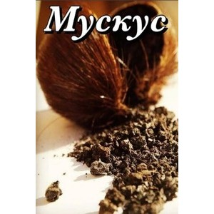 Мускусные ароматы | Нота мускуса в духах