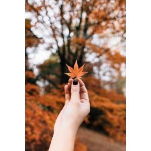 Женские осенние ароматы. Духи на осень 2017