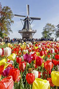 Голландские духи | Парфюмерия Нидерландов